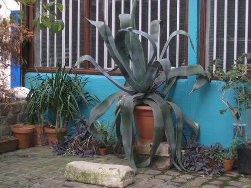 A strange plant